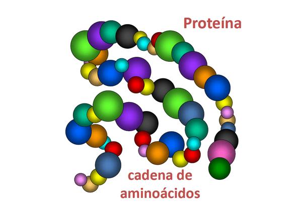 Identifican proteína que influye en la evolución de la Fibrosis Quística