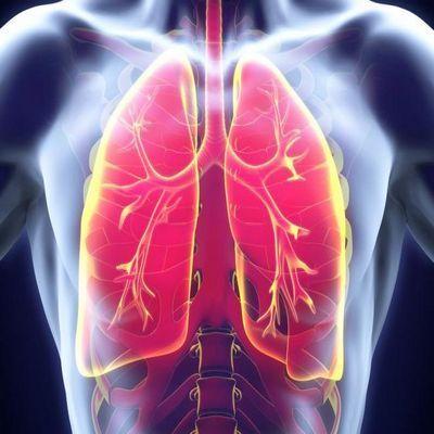 pulmones fq