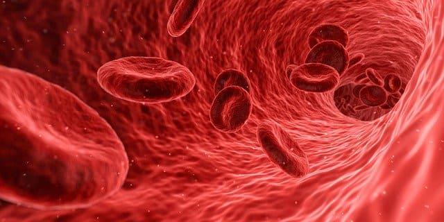 Níveles sanguíneos respuesta antibiótico