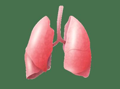 pulmones cuerpo humano